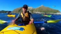 KANO - Yeni Zelanda'da Fok Balığının Şok Hareketi