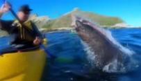KANO - Yeni Zelanda'da Fokun Şok Hareketi