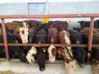 GENÇ GİRİŞİMCİLER - Antalya'da Desteklemeyle 400 Başlık Çiftlik Kuruldu