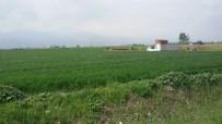 YERLİ TOHUM - İşyurtlarından Milli Tohumla Üretim Seferberliği