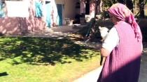 Köyün Kaderine Terk Edilen Kedilerine Annelik Yapıyor