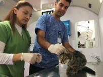 SOKAK KEDİSİ - İBB Vetbüs Çekmeköy'de Hayvanları Sağlık Taramasından Geçirdi