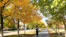 KıRAATHANE - Kırgızistan-Türkiye Manas Üniversitesi'nde Millet Kıraathanesi Açıldı
