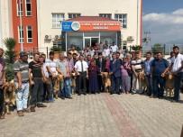 Osmaniye'de Birlik Üyelerine Koç Dağıtımı Yapıldı