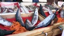 Batı Karadenizli Balıkçılar Palamutla Sevindi