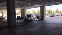 Edirne'de Terör Örgütü Operasyonu