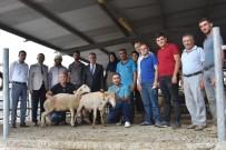 BÜYÜKBAŞ HAYVANLAR - Genç Çiftçilere Küçükbaş Hayvanları Teslim Edildi