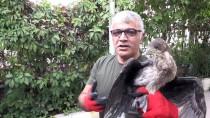 Iğdır'da Yavru Karabatak Koruma Altına Alındı