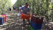 Köyünde Meyve Yetiştiriciliğinin Önderi Oldu
