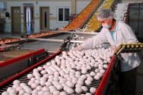 TÜKETICI FIYATLARı ENDEKSI - Malatya'da Ağustos Ayının Zam Şampiyonu Yumurta Oldu