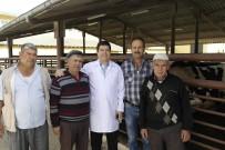 KORUYUCU HEKİMLİK - Milas Mezbahanesi Müdürü Barış Saylak'tan Şarbon Açıklaması