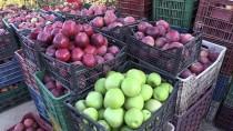 SULTANDAĞI - Afyonkarahisar'ın 'Organik Elması'na Yabancı İlgisi