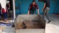 İznik Gölü'nde Dev Yayın Balığı Yakalandı