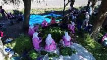 POTASYUM - Moringayla Markalaşıp Pazara Açıldılar