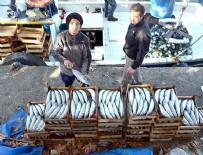 Palamut balıkçıların yüzünü güldürdü