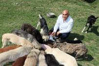 BONUS - Zonguldaklı İki Aile 120 Sokak Köpeğine Yuva Oldu