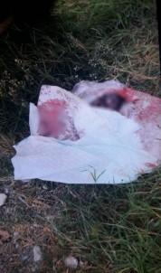 İstanbul'da korkunç olay! Çöp kenarında yeni doğmuş bebek cesedi bulundu