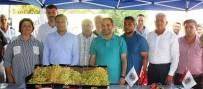 HÜSEYİN ÇELİK - Alaşehir'de Üzüm Yarışması