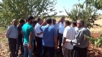 KONUKLU - Badem Diyarı Adıyaman'da Hasat Sürüyor