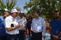 KONUKLU - Besni'de Badem Hasadı Başladı