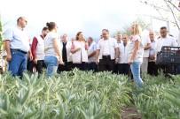 MISYON - Düzce'de Tıbbi Ve Aromatik Bitkilerin Hasadı Yapılıyor