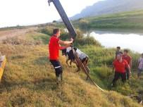 SULAMA KANALI - Sulama Kanalına Düşen İnek Vinçle Kurtarıldı