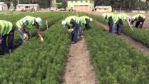 KUŞBURNU - 'Yeşil Doğu Anadolu' İçin Mesaideler