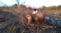 Baraj Kapakları Bu Kez İnekleri Mahsur Bıraktı