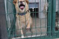SOKAK KÖPEĞİ - Bursa'da İki Çocuğu Isıran Köpek Yakalandı, Karantinaya Alındı