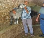 Çalınan Keçileri Bulununca Sarılıp Hasret Giderdi