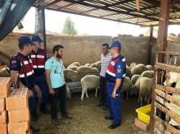 GEYRE - Çalınan Koyunlar Çalıntı Çıktı