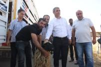 Genç Çiftçilere Koyun Desteği
