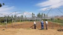 KONYA OVASı - Kaman İlçesinde Örtü Altı Sebze Yetiştiriciliği