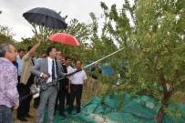 Kırıkkale'de Badem Hasadı Başladı