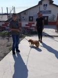 Niksar Belediyesi Hayvanları Sahiplendiriyor