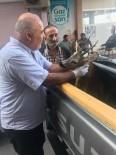 Trabzon'da Yaralı Karaca Tedavi Altına Alındı