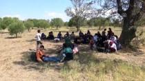 GÜLPıNAR - Çanakkale'de 67 Düzensiz Göçmen Yakalandı