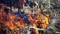 ANIZ YANGINI - Çukurova Anız Yangınından Kurtuluyor