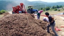 MUSTAFA AKSOY - Fındık Üreticilerinin Kurduğu Kooperatif İhracatı Hedefliyor
