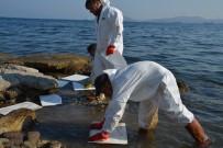 FUEL OIL - İzmir'de Deniz Kirliğinin Nedeni Tespit Edildi