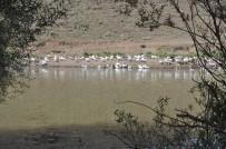 Kars'ta Kazlar Besiye Alındı