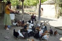 (Özel) Üniversiteli Genç Kız, Kastamonu'da İmece Usulü Köy İşlerinde Çalışıyor
