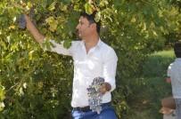 Sason'da Üzüm Hasadı Başladı