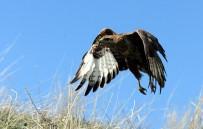 VAN YÜZÜNCÜ YıL ÜNIVERSITESI - Van'da Tedavileri Tamamlanan 39 Değişik Tür Kuş Yaşam Alanlarına Bırakıldı