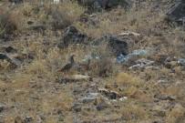 AĞRı DAĞı - Ağrı Dağı Milli Parkı'na 'Kene Avcısı' Bırakıldı