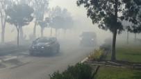BAKÜ - İzmir'de Ot Yangını Paniğe Sebep Oldu