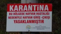 SELIMIYE - Kocaeli'de Şarbon Paniği; 3 Köy Karantinaya Alındı
