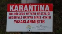 SELIMIYE - Kocaeli'de Şarbon Paniği Açıklaması 3 Köy Karantinaya Alındı