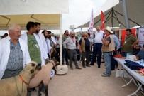 'Küçükbaş Hayvan Ve Ekipmanları Tanıtım Günleri'nde Çoban Köpekleri Ve Koçlar Yarıştı