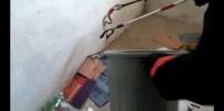 NEBIOĞLU - Okula giren yılanı itfaiye yakaladı